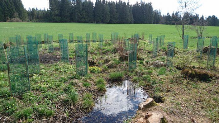 Der eigene unternehmenswald von fischer raumgestaltung for Raumgestaltung pflanzen