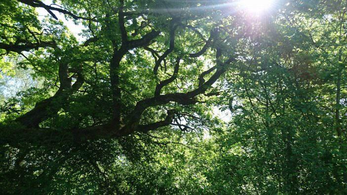 Baum-Krone-Sonne