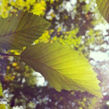 umwelt-Blatt-Sonne